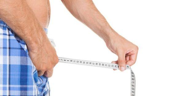 Koks yra vidutinis penio dydis?